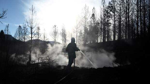 Глава Омской области пригрозил чиновникам «заготовкой леса»