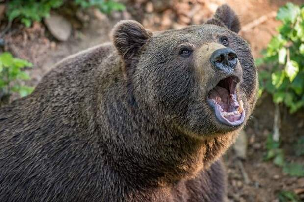 В Колорадо в результате нападения медведя погибла женщина