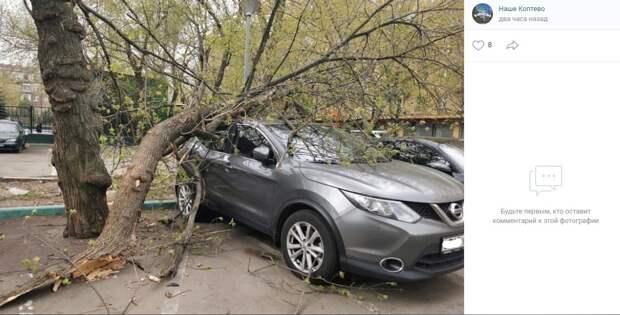 Во дворе на Клары Цеткин дерево упало на автомобиль