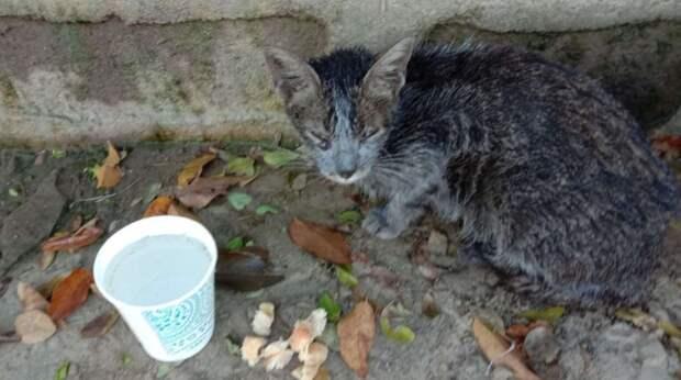 Из грязи выглядывала маленькая серая мордочка… Котёнок чудом выжил после тайфуна