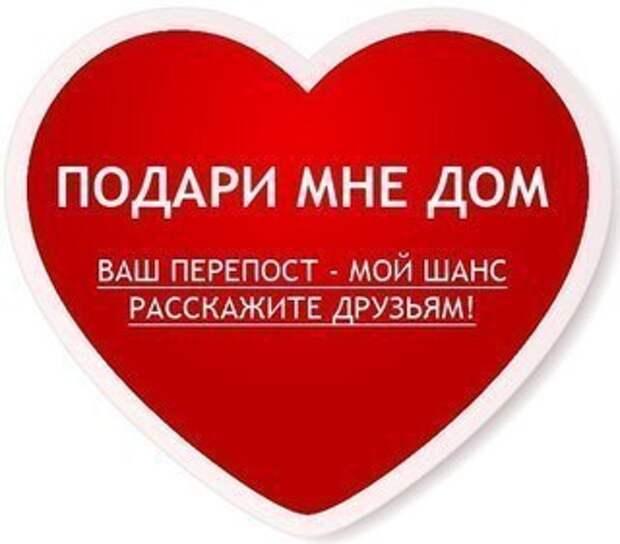 Спасите рыжих ангелочков! Пожалуйста! Жизнь вас отблагодарит!