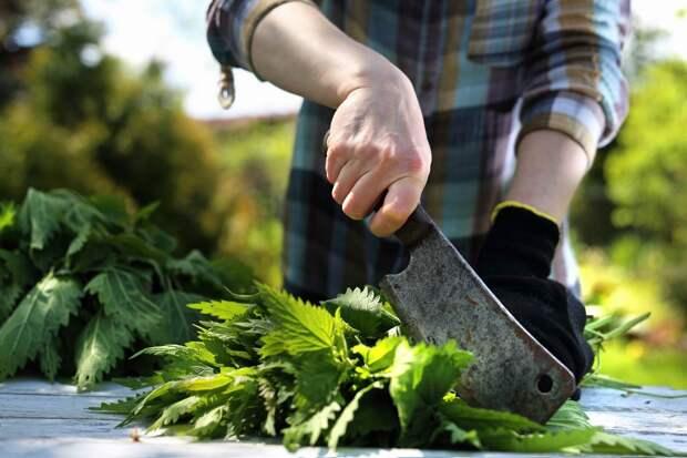 Муж вылил кастрюлю зеленого борща в раковину, больше так не варю, научилась