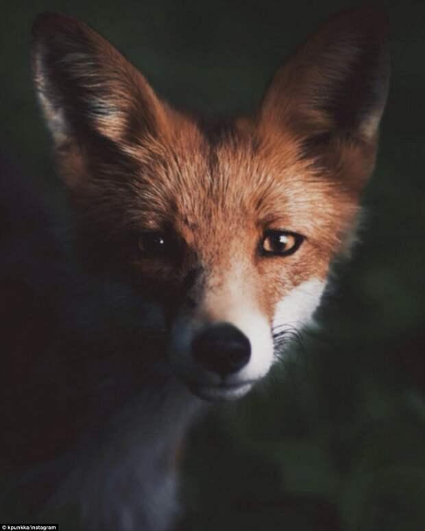 Тайная жизнь животных, подсмотренная финским фотографом в скандинавских лесах