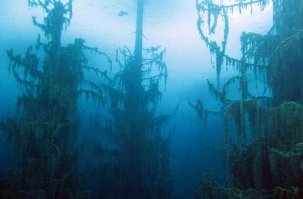 Озеро, где деревья как будто растут вверх тормашками (ФОТО)