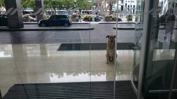 Бродячий пес очаровал стюардессу и она забрала его к себе домой