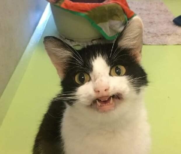 Кошка улыбается