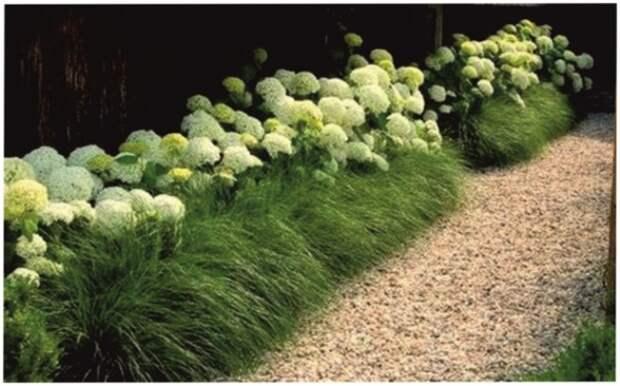 Неприхотливые декоративные кустарники в ландшафтном дизайне: фото и описания (56 фото)