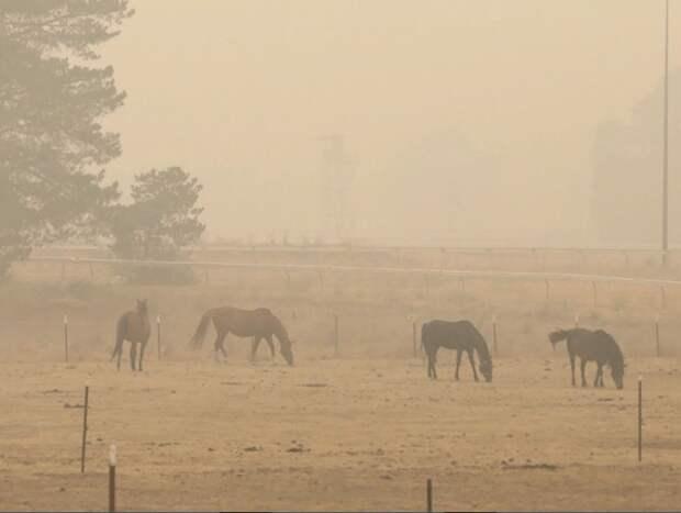 Власти Австралии выделят 1,4 млрд долларов на восстановление после пожаров