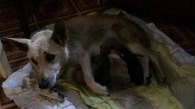 Ради спасения щенят житель Омска залез в затопленную канаву