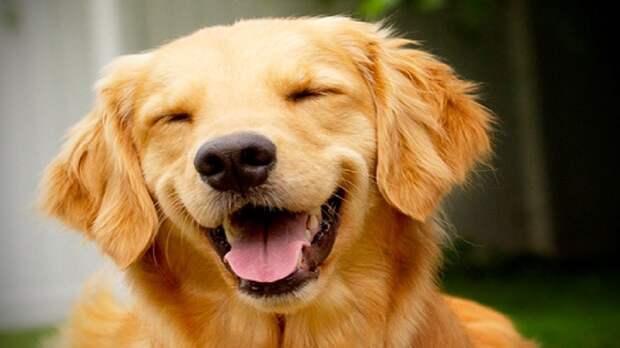 Учёные доказали способность животных и птиц смеяться