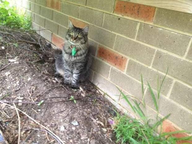 Любимая кошка семьи потерялась, а спустя 6 лет, когда люди лишились надежды, им позвонили…