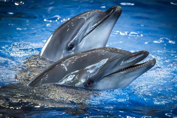 Panorama.am: Дельфины по характеру почти не отличаются от людей