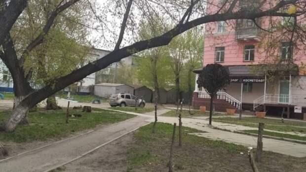 Общественника возмутила санитарная рубка на Строителей в Барнауле