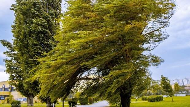 МЧС предупредило о сильных порывах ветра в Рязанской области