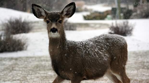 ФАН выяснил, откуда в Курской области взялись трупы благородных оленей
