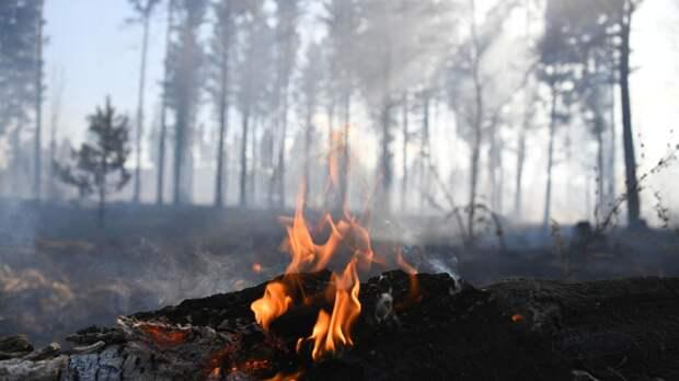 В Нижегородской области вводят особый противопожарный режим