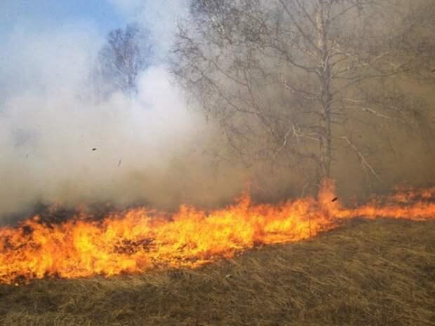 В Красноярске из-за поджога травы горит излюбленное место отдыха горожан— остров Татышев