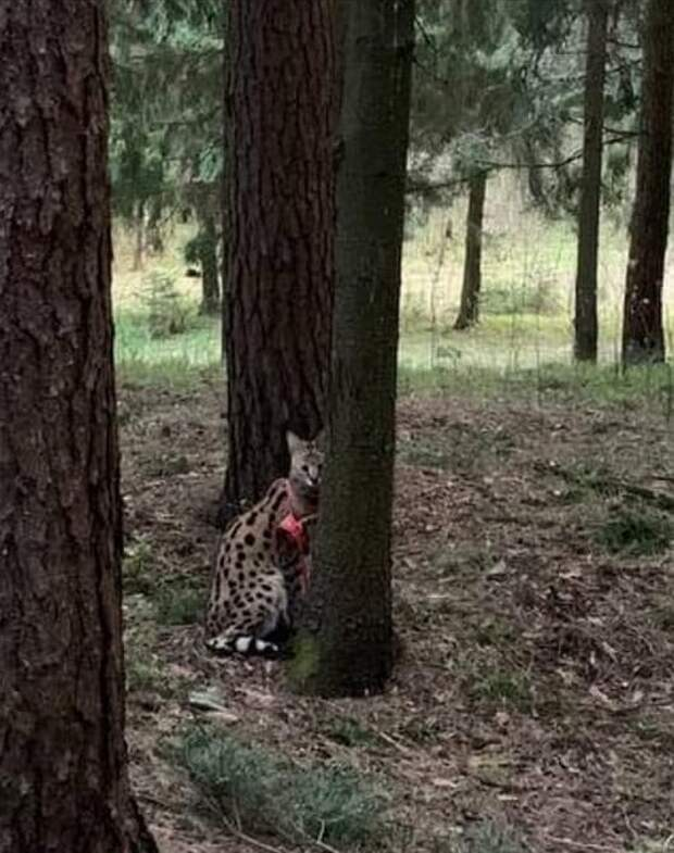 """Фото: сообщество в Facebook """"Минск. Пропавшие и найденные коты"""""""