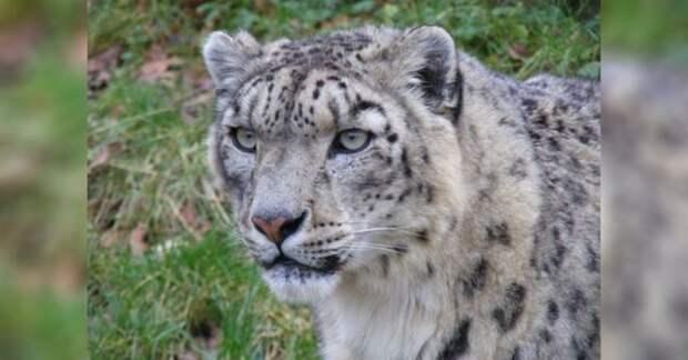 Вот 10 удивительных фактов о животном, которые недавно были под угрозой исчезновения
