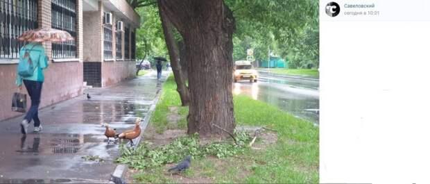 Фото дня: на Полтавской утки делят еду с голубем