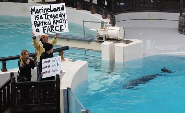 Канада запретила поимку дельфинов и китов даже для дельфинариев