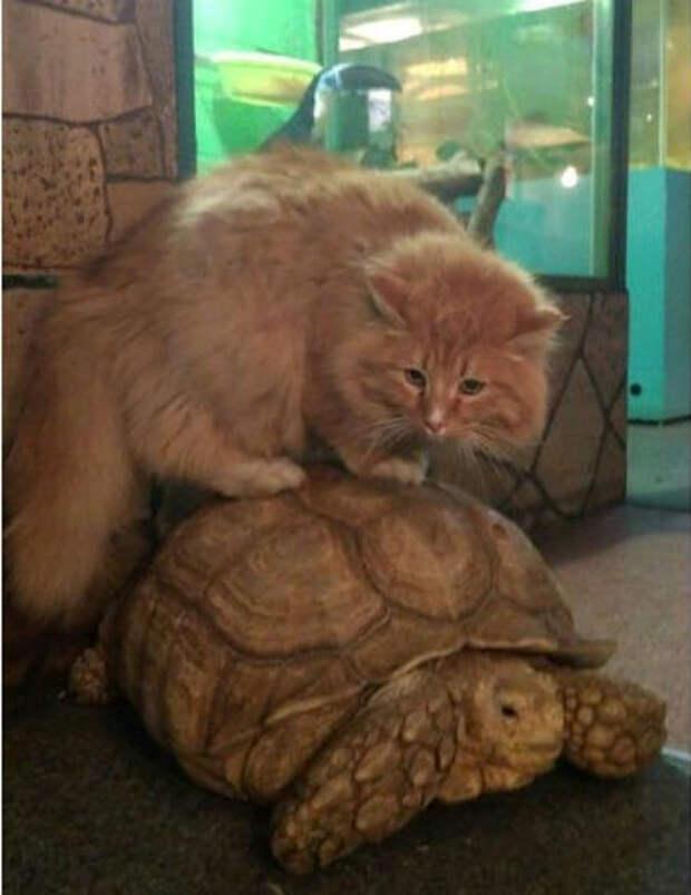 Кот Батон предотвратил побег черепах из зоогалереи в Иркутске