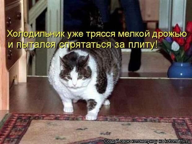 1451737521_kotomatricy-21