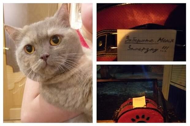Хозяева бросили породистую кошку на остановке с запиской «Заберите меня. Замерзну»