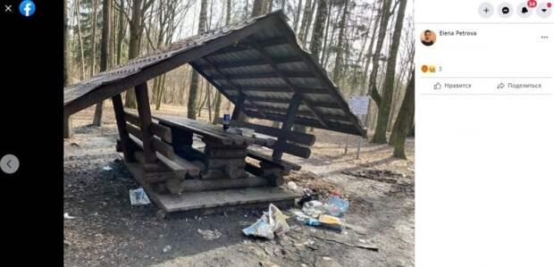 Последствия пиршеств в Химкинском лесопарке убрали — Департамент природопользования