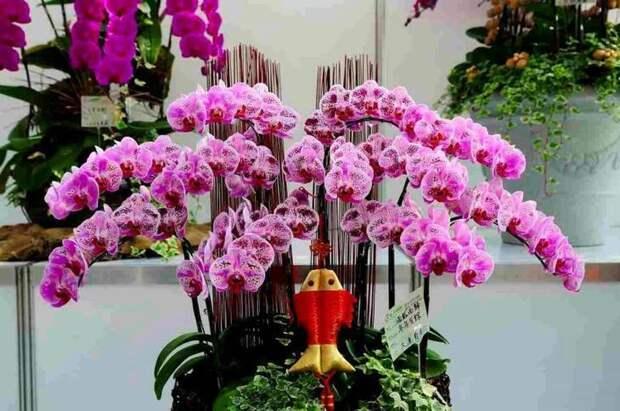 Красивый букет из горшечных орхидей
