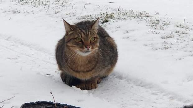 Парень пожалел «одинокого» кота и посадил его к себе в авто. Но питомца, оказывается, уже искали