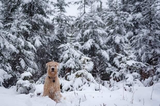 10 января в Удмуртии похолодает до -6 градусов