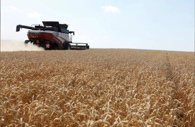 Комбайн убирает пшеницу в поле в Ставропольском крае, 4 июля 2019 года. REUTERS/Eduard Korniyenko