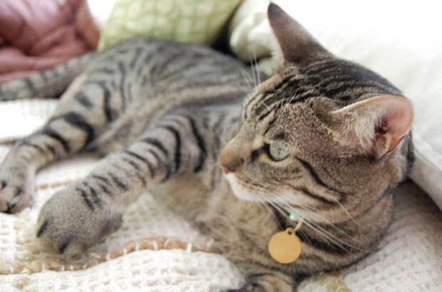 5. Гигантская лапа животные, кот, оса, пчела, реакция, ужаление, укус
