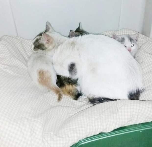 На улице холодало, и мама-кошка старалась согреть дрожащих котят