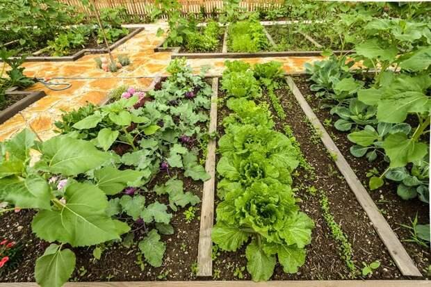 посадка овощей в апреле
