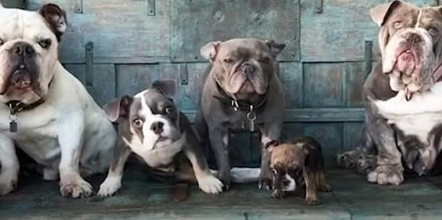 Собаки сидят