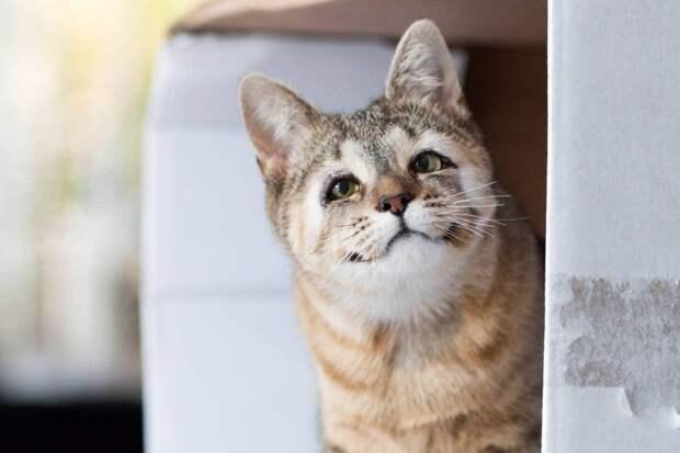 Милые пушистые уроды: этих кошек и собак никто не хотел, но они обрели свою семью