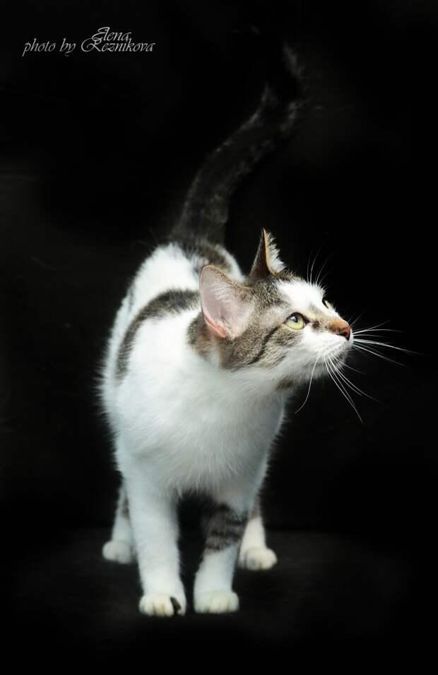 Подарить дом такой чудесной кошке - к чему бы это? Конечно к счастью!!!