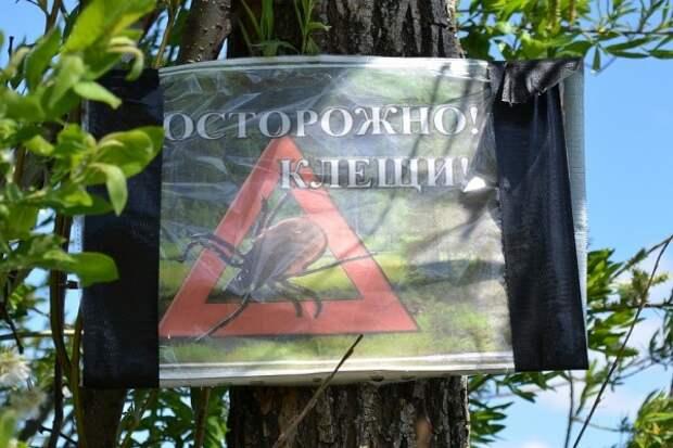Клещи уже успели покусать крымчан