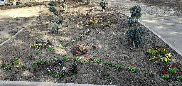 В Симферопольском парке высадили цветы виолы и маргаритки