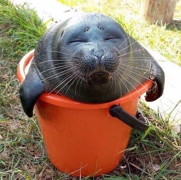 Забавные животные, которые вызовут улыбку и поднимут настроение