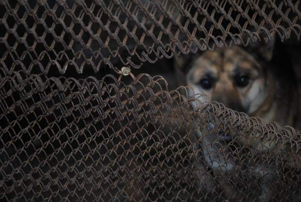 Отлов бездомных собак пройдет в Усть-Кутском районе 20 октября