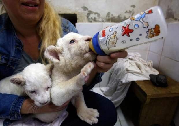 Олтичная фотоподборка с животными (30 фото)
