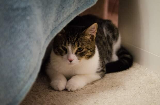 Обычный кот с необычными глазами ищет родное сердце!