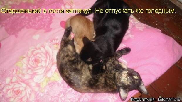 1451737531_kotomatricy-1
