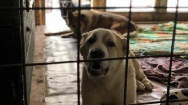 Десятки собак сгорели в приюте под Екатеринбургом