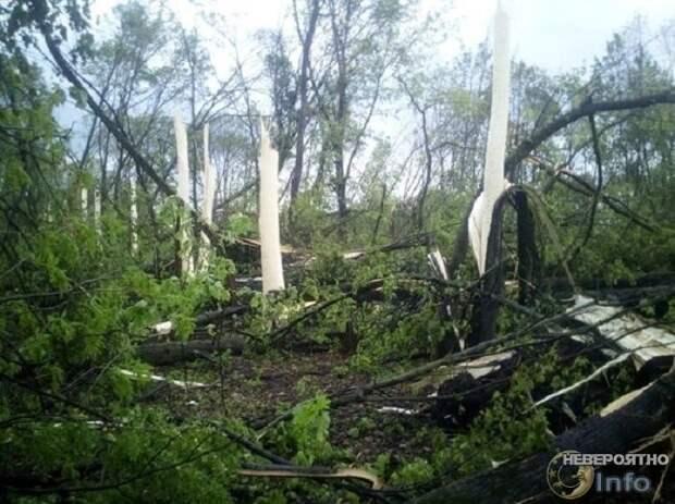 Деревья под Орлом сбросили кору