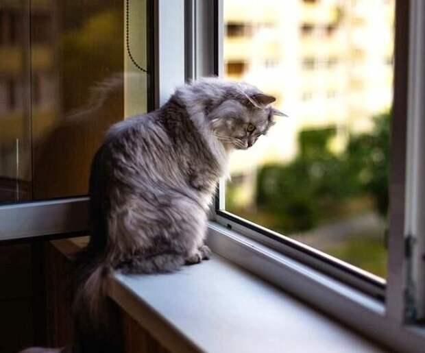 Пыша. Кошка, когда-то любимая
