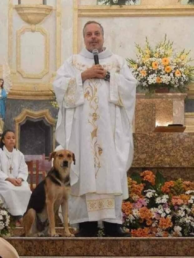 Пес в церкви